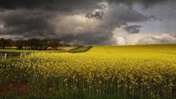 Фото бесплатно закат, поле, цветы