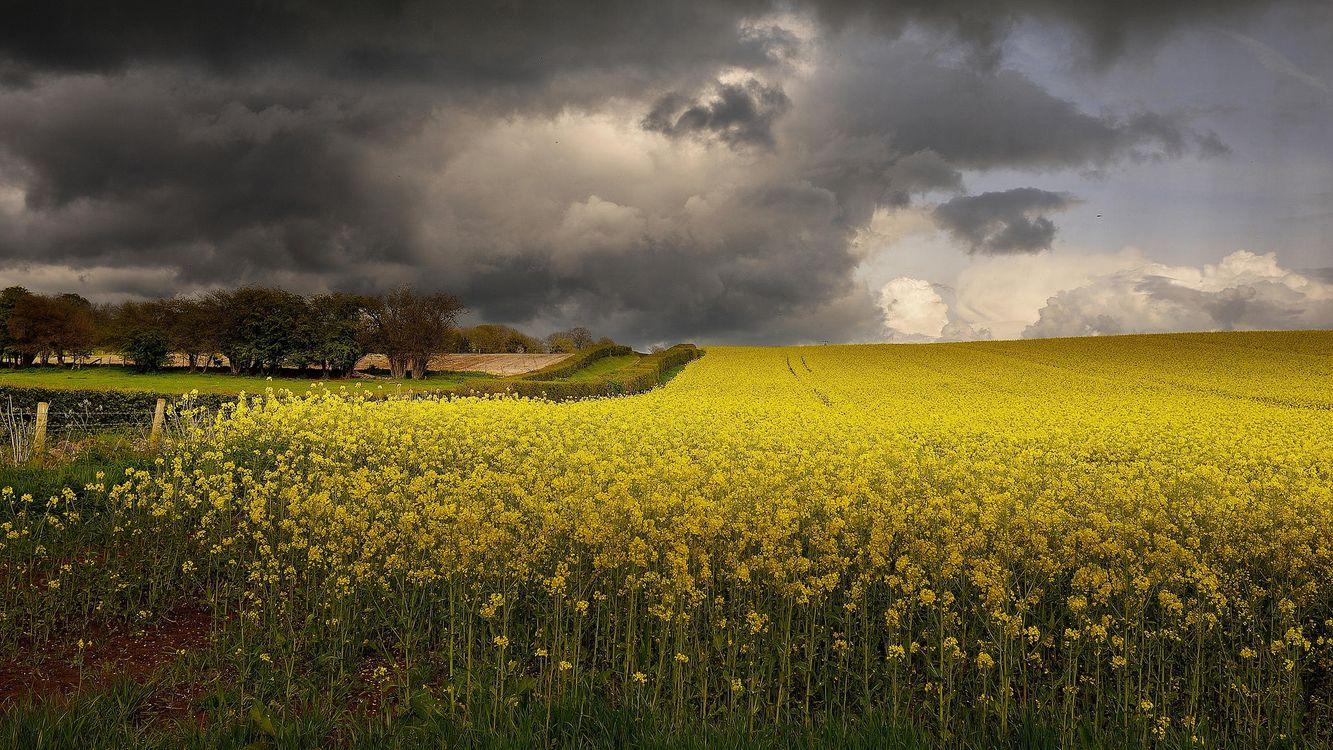 Обои закат, поле, цветы картинки на телефон