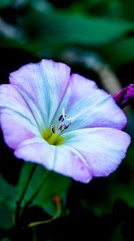 Flowers. curly. pink flower. little flower.