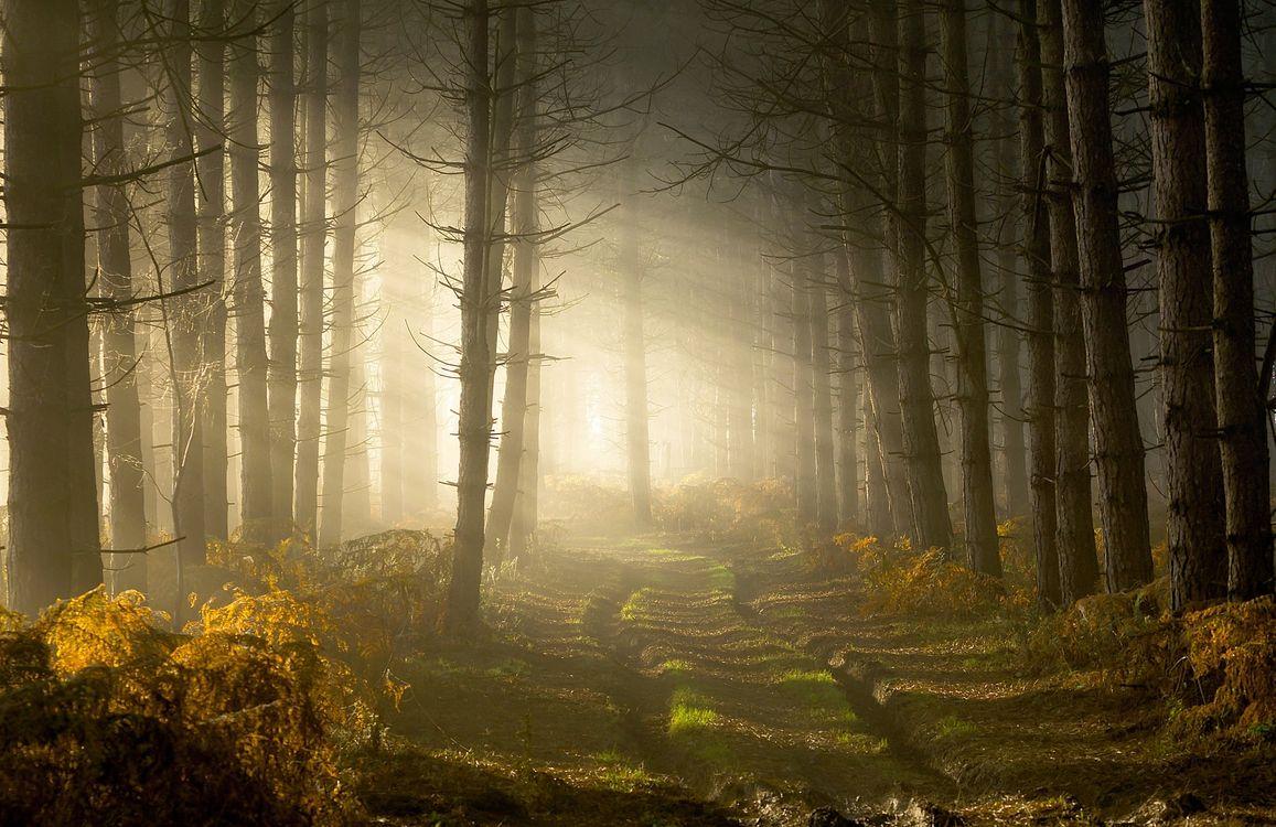 Фото бесплатно деревья, солнечный луч, путь - на рабочий стол