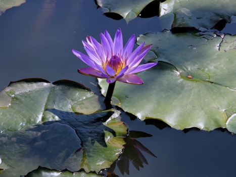 Photo free body of water, beautiful flowers, flower