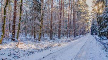 Фото бесплатно снег, лес, пейзаж