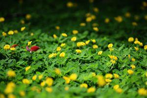 Бесплатные фото цветы, зеленый, трава, рыжий, цветок, лист, поле