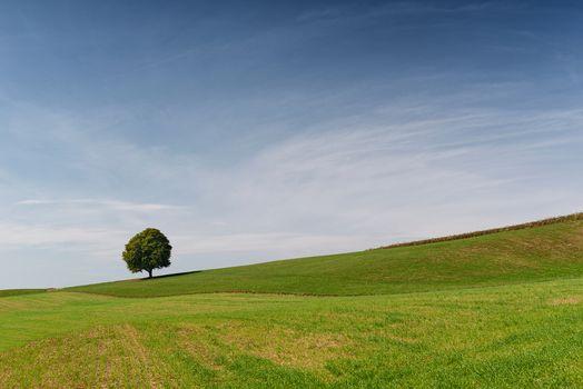 Фото бесплатно поле, одинокое дерево, холм