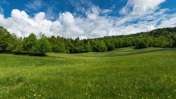 Фото бесплатно поле, холмы, деревья