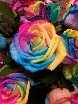 Фото бесплатно роза, радуга, разноцветная