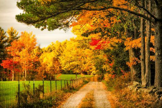 Фото на заставку парк, осень