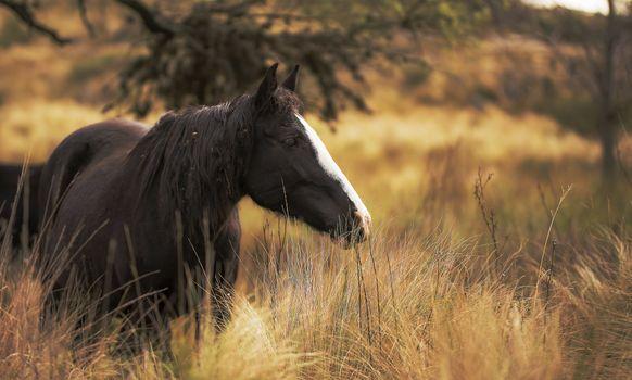 Фото бесплатно лошадь, вид профиля, поле