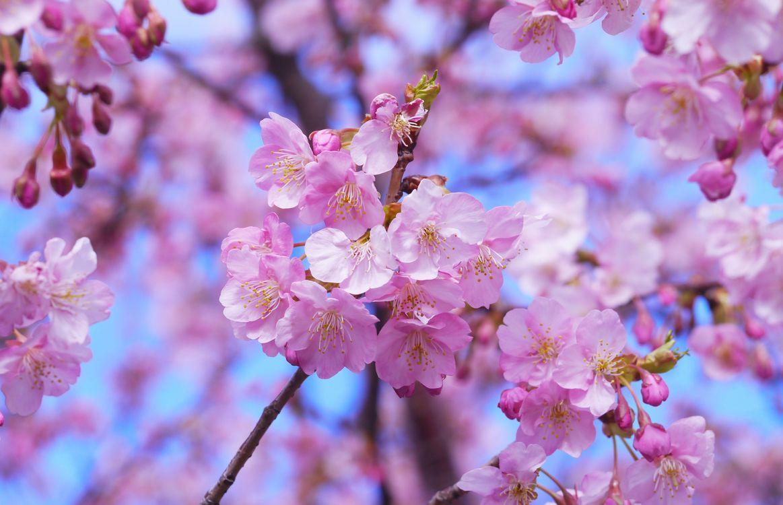 весна · бесплатное фото