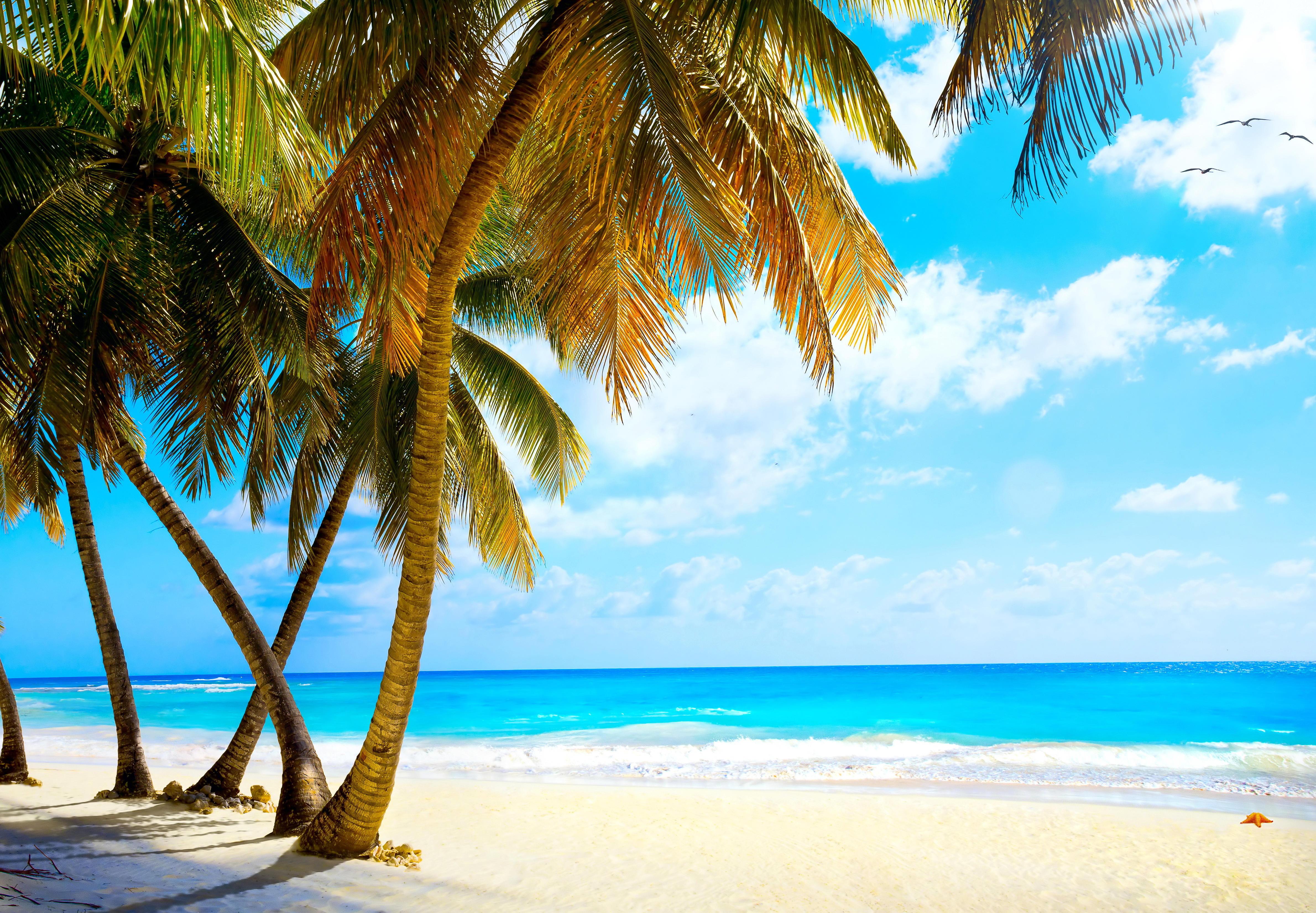 природа песок пляж дома море пальмы  № 3778343  скачать