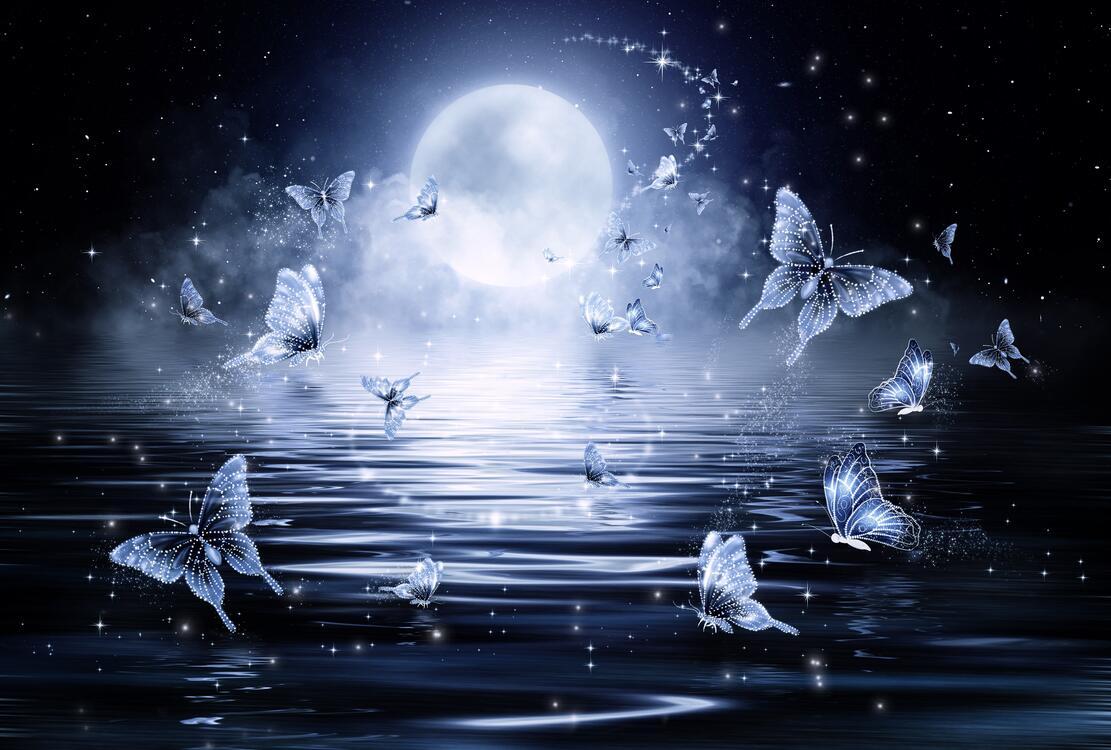 Фото бабочки луна ночь - бесплатные картинки на Fonwall