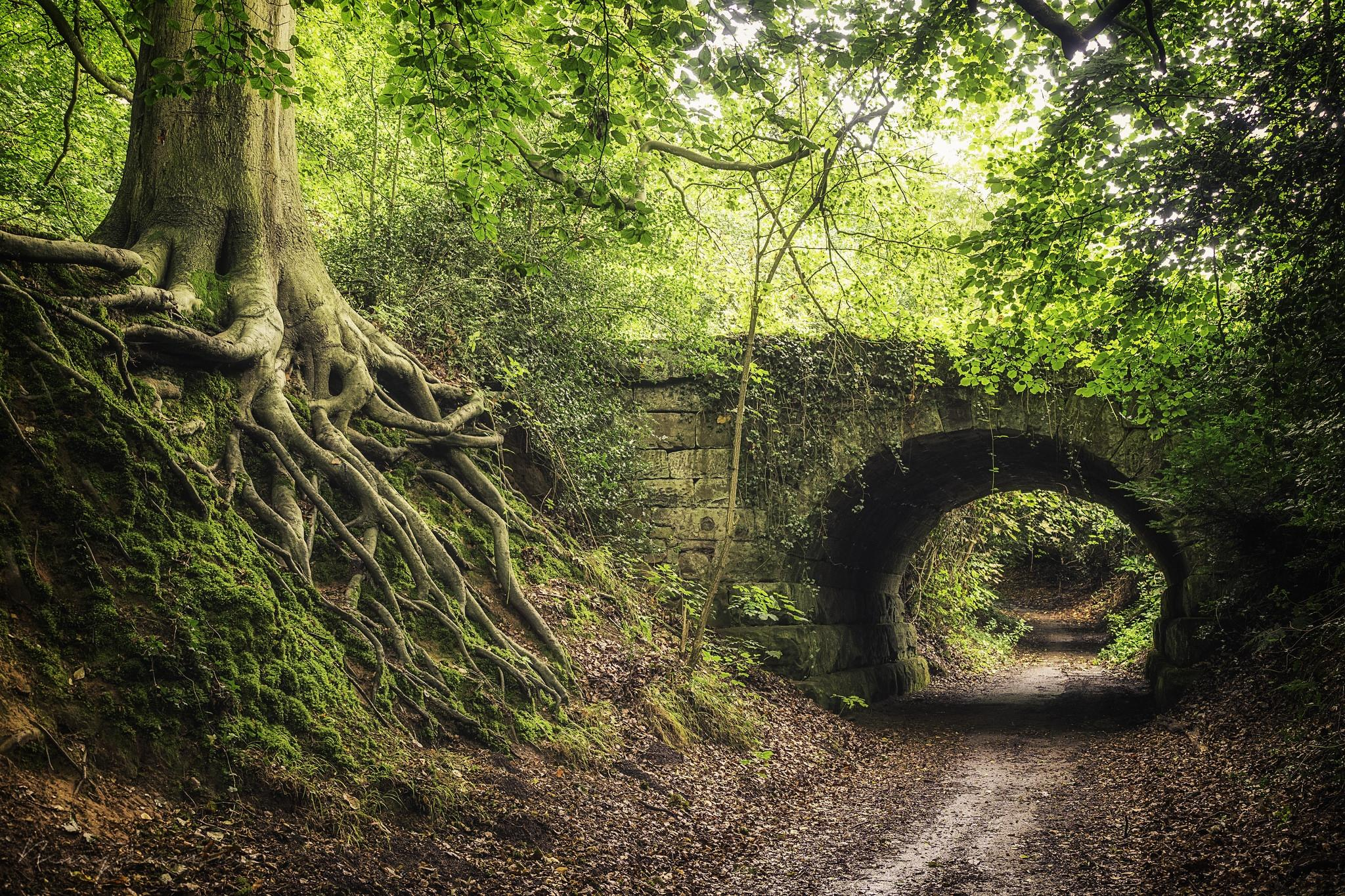 Обои лес, деревья, дорога, мост