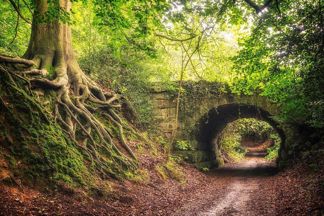 Картинка лес, деревья, дорога, мост, арка, природа, пейзаж на рабочий стол. Скачать фото обои пейзажи