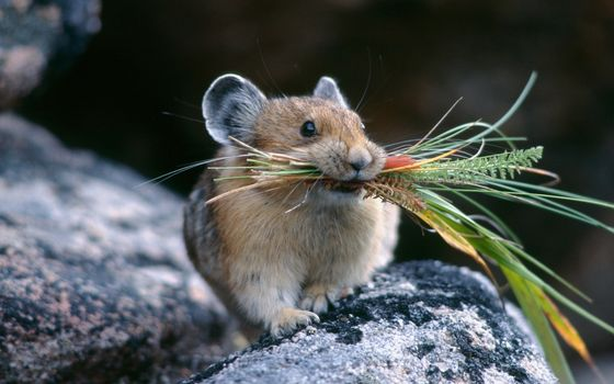 Photo free mouse, plants, fluffy