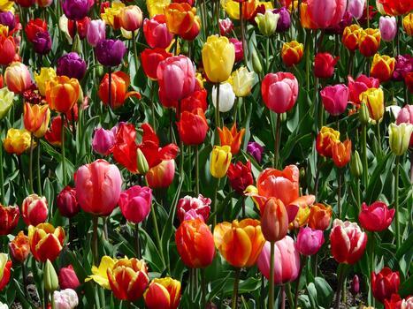 Фото бесплатно разноцветные, флора, цветущее растение