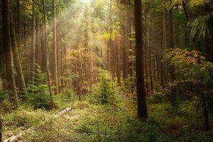 Заставка лес, деревья, солнечные лучи