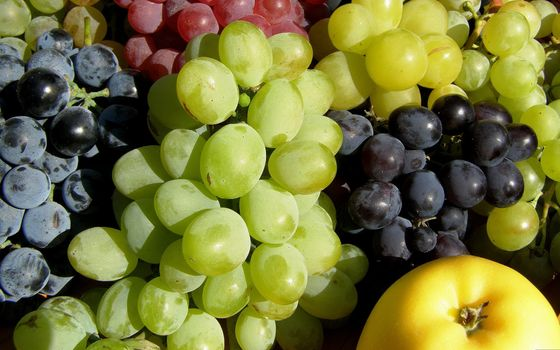 Photo free grapes, fruits, colors