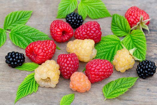 Raspberry and blackberry berries