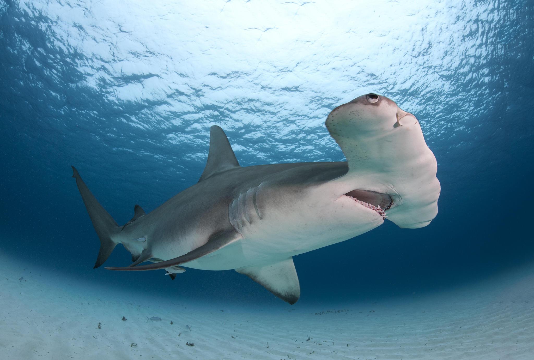 рестораны рис фотографии акул высокой четкости область неделя феврале
