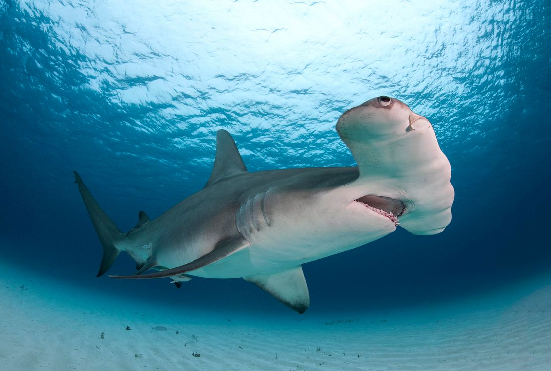 покажи мне картинки акул