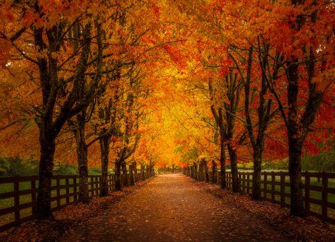 Заставки парк, деревья, аллея