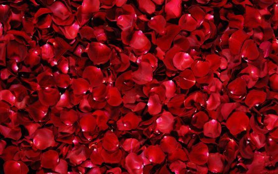 Photo free Red, Rose, Petals