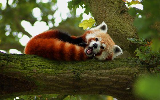 Photo free animals, nature, red
