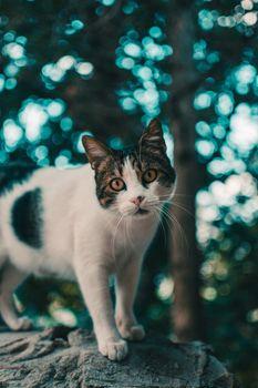 Photo free cat, boke, glare