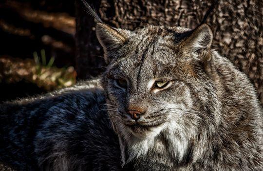 Заставки позвоночные, кошки мелких и средних размеров, фауны