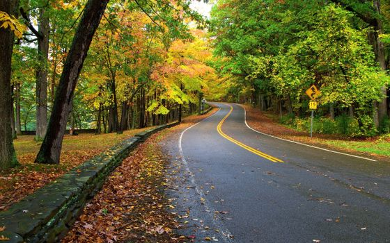 Фото бесплатно лес, дорога, осень