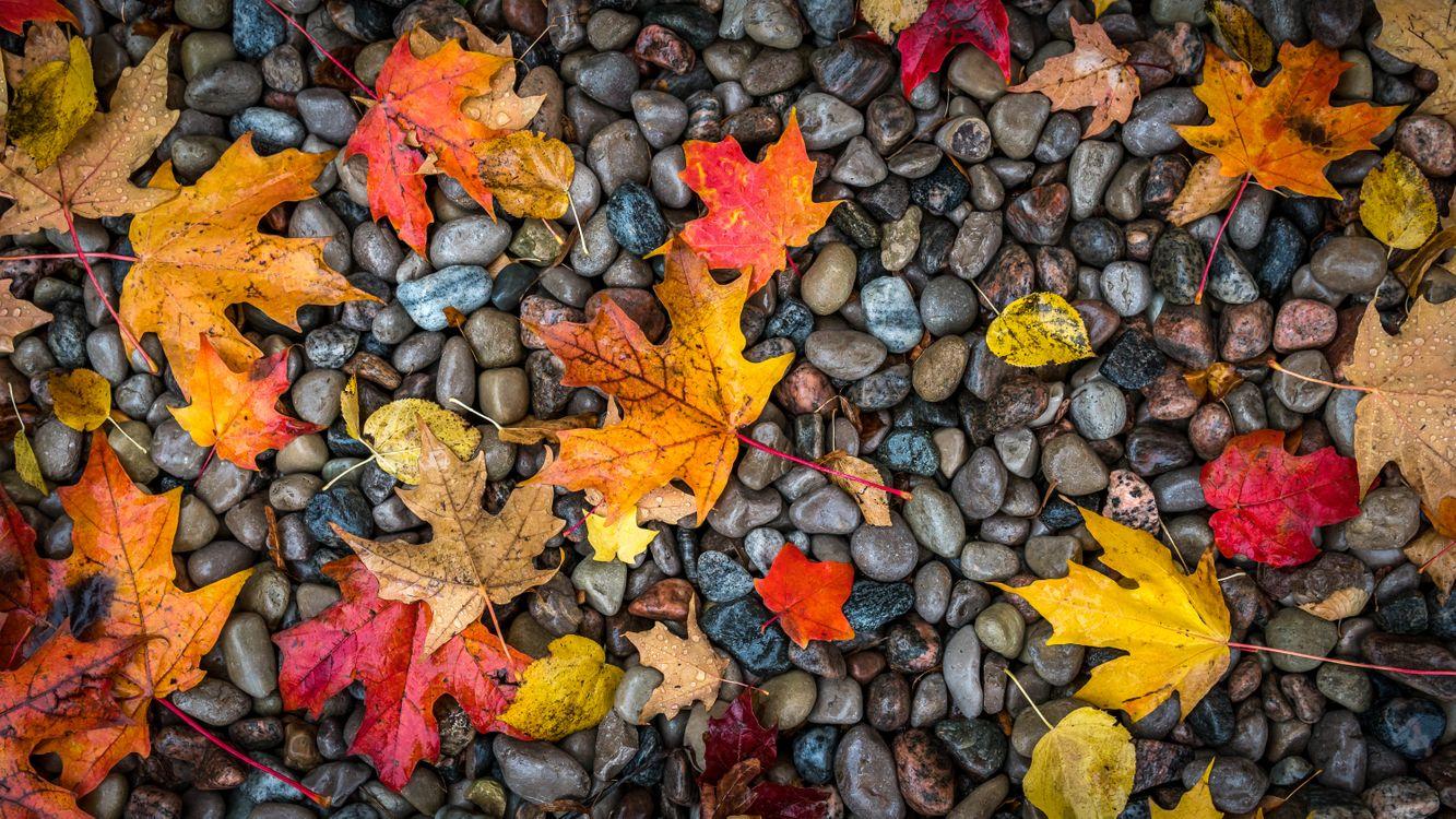 Осенний клен · бесплатное фото