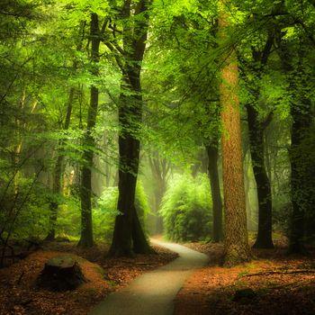 Заставки тропинка, солнечный свет, природа
