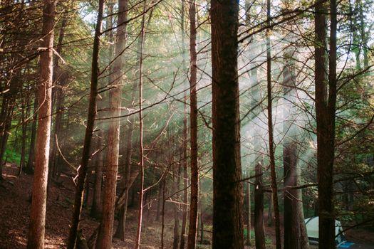 Фото бесплатно лист, джунгли, дерево