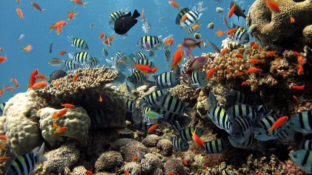 Фото бесплатно подводный, рыба, плавать