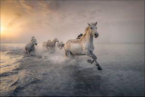 Фото бесплатно прыжок, закат, табун