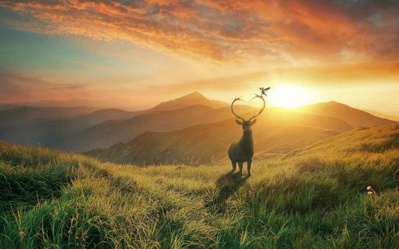 Заставки олень, поле, закат