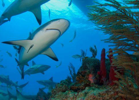 Заставка акула, море на айфон