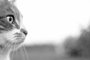 Фото бесплатно монохромный, котенок, природа