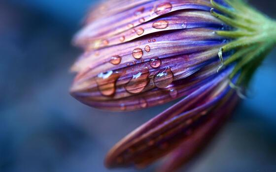 Фото бесплатно цветок, капли, роса