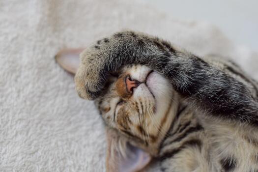 Фото бесплатно нос, кошки мелких и средних размеров, котенок