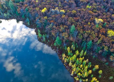 Photo free water, reflection, array an forest