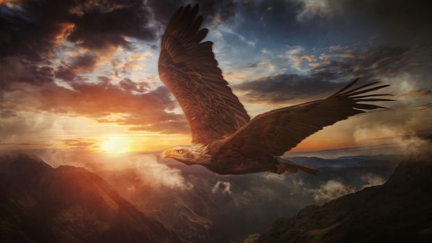 Photo free eagle, fly, predator birds