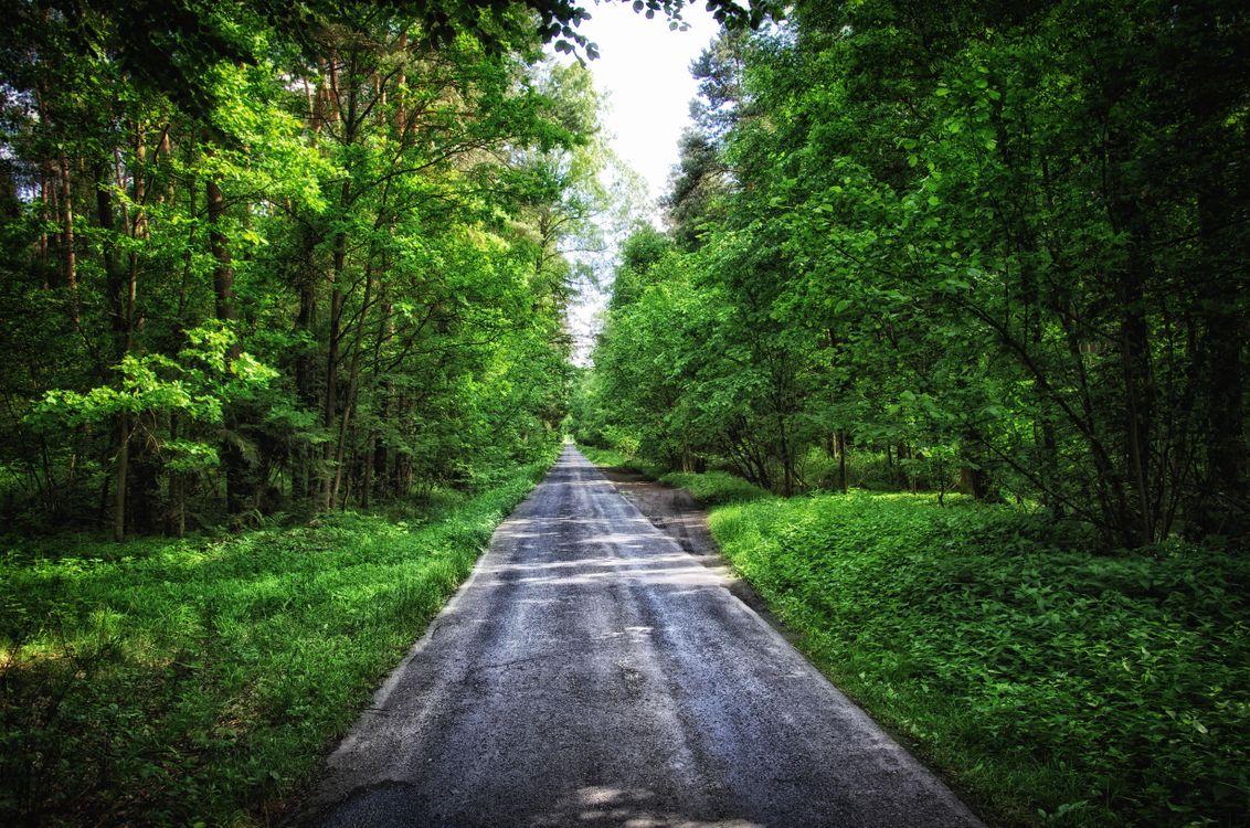 Картинки лес и дорога в хорошем качестве