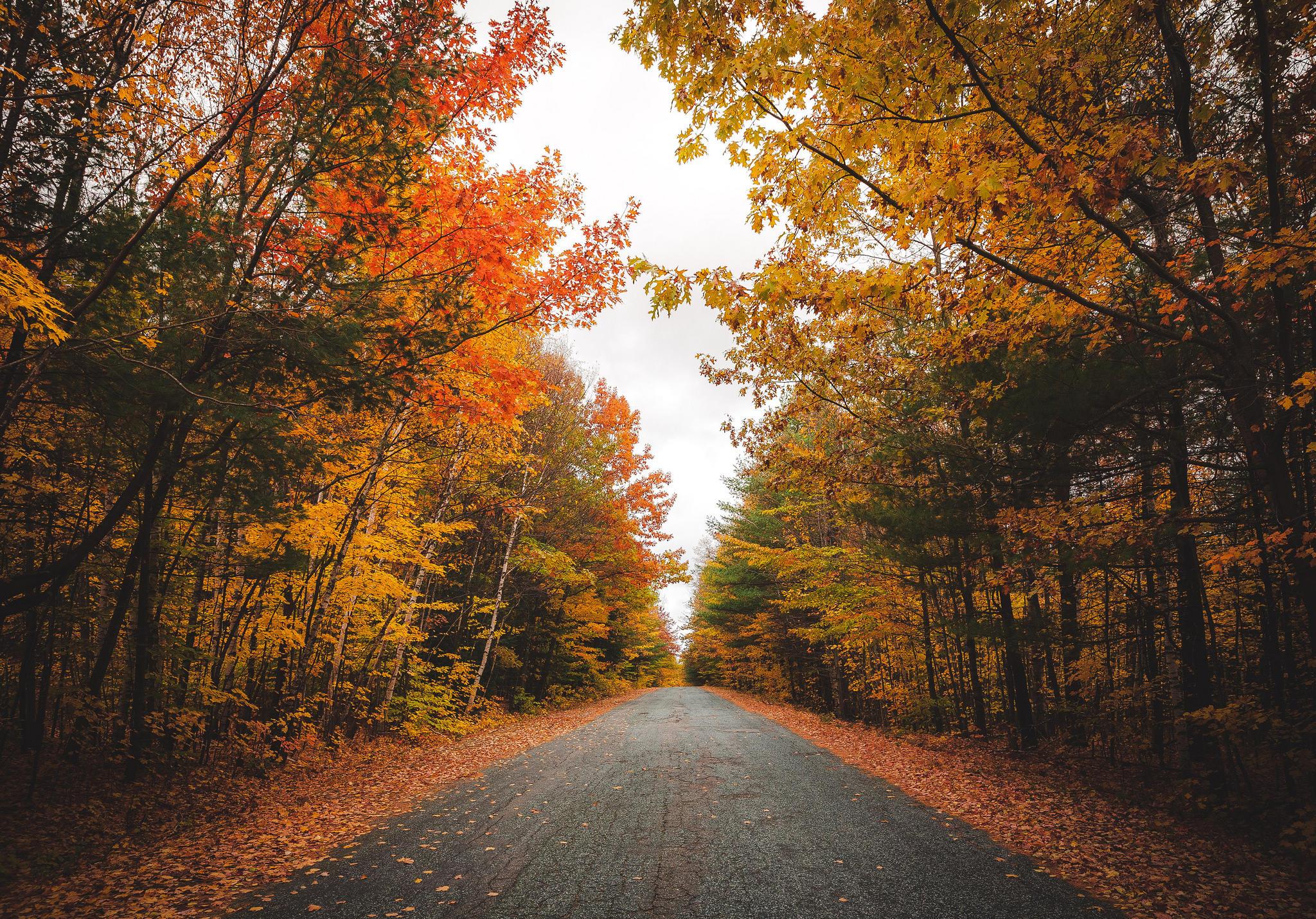 Обои осень, дорога, лес, деревья