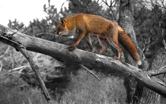 Photo free wood, branch, wildlife