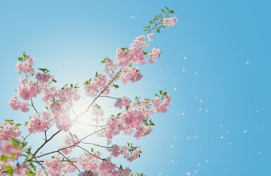 Фото бесплатно вишня, ясное небо, лепестки