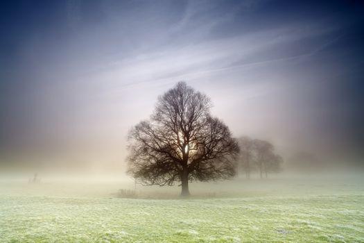 Фото бесплатно одинокое дерево, поле, туман