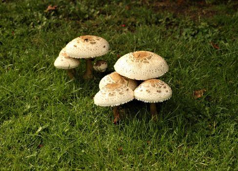 Заставки природа, трава, грибы природа