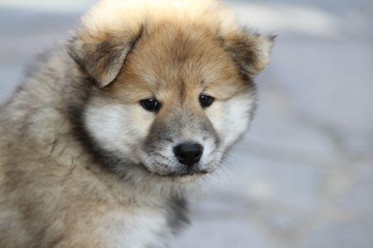 Фото бесплатно щенок, милая, морда