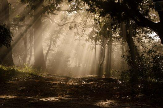 Фото бесплатно лес, солнечные лучи, растения
